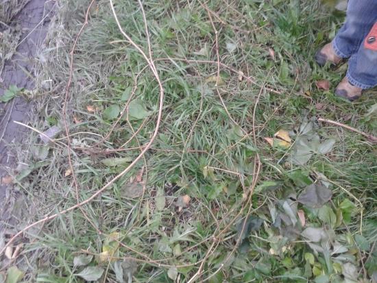 поделки из веток и дерева (6)