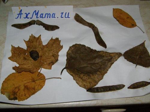 Поделки из листьев для малышей картина