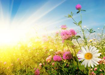 Стихи про лето короткие (2)