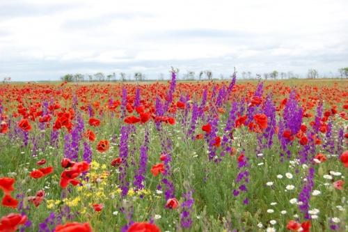 Стихотворение полевые цветы полевые