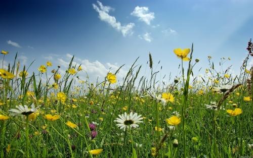 Стихи про полевые цветы для детей 2