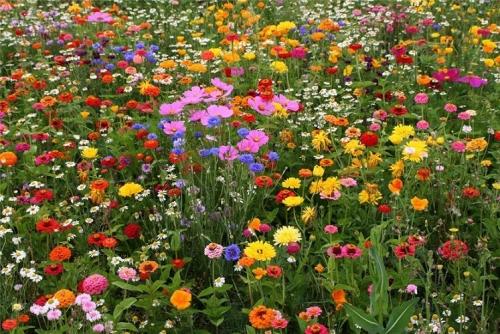 Стихи про цветы для детей 4-5 лет короткие