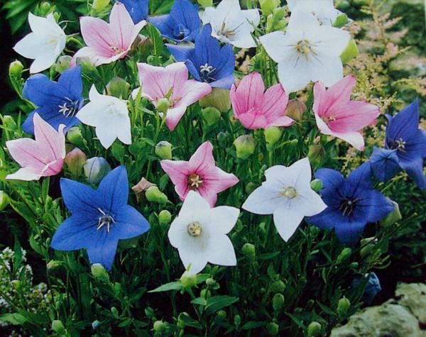 Стихи про цветы колокольчики для детей