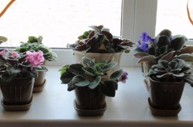 Стихи про цветы на окне в горшках 3