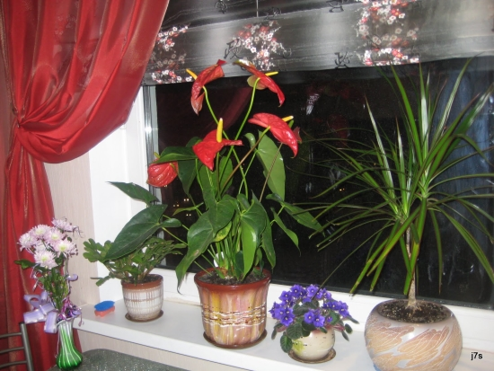 Стихи про цветы на окне в горшках