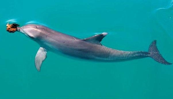 Дельфин схема оригами