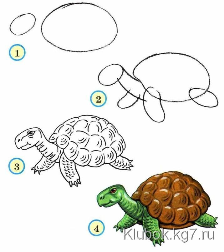 Пошаговые рисунки животных с помощью кругов и овалов (6)