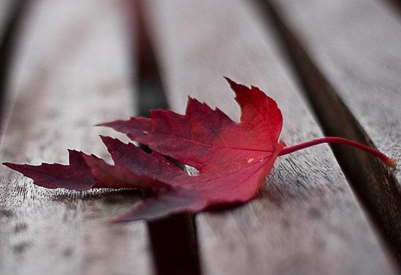 Рассказ про осенние листья Красный листик